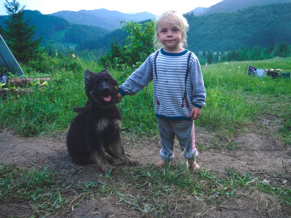 Find den rette hund til din familie