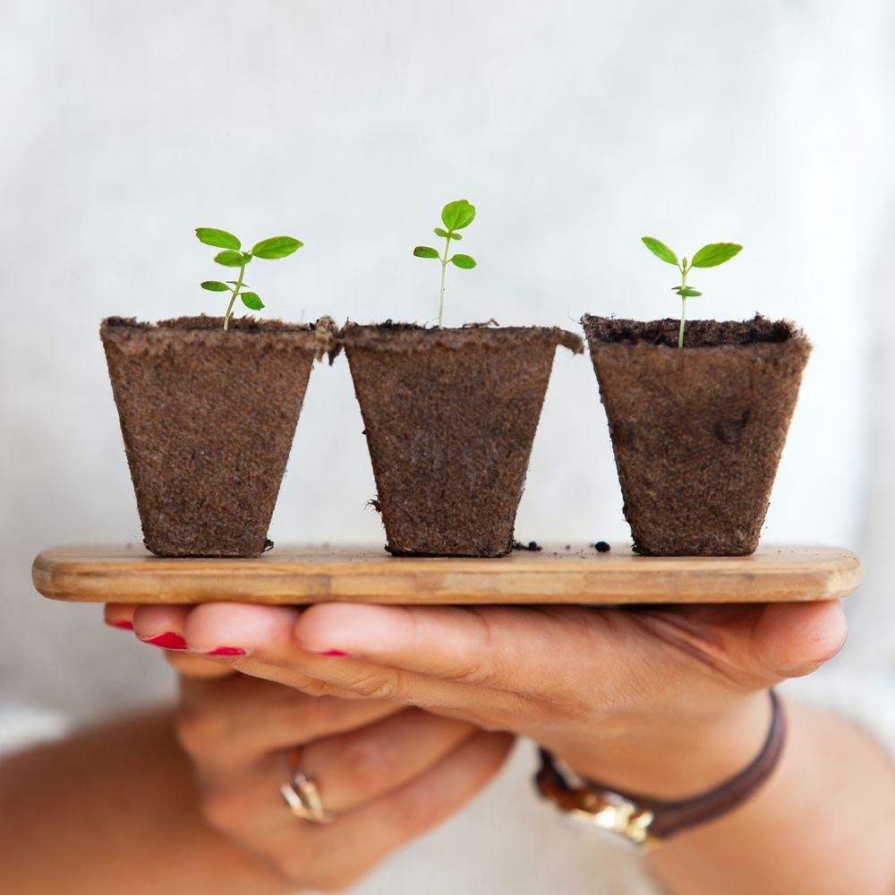 Indret dit hjem med grønne planter