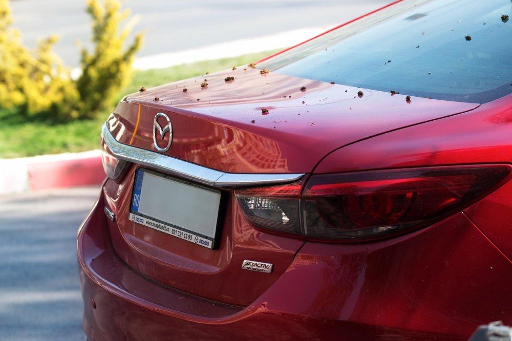 Mazda, brugt Mazda, pris på brugt Mazda
