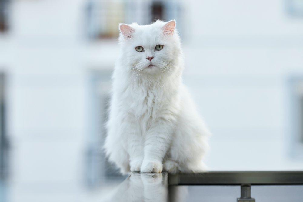 Skal du sende din kat i kattepension i Ølstykke?