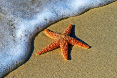 Tre detaljer ved Sunny Beach som mange overser